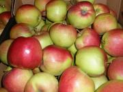 Яблоки,  Я продам яблоки Казахстан