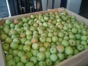 Яблоки из Польши от производителя польская компания